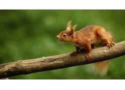 松鼠,动物,性质,木488312