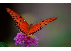 动物,鳞翅类,昆虫,宏,植物438335