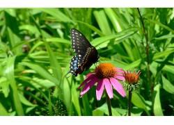 动物,鳞翅类,昆虫,植物,宏379647