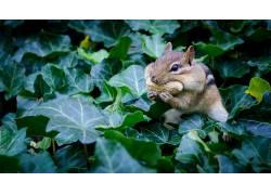 松鼠,动物421933