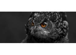 猫头鹰,动物587213