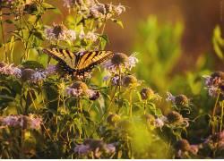 动物,鳞翅类,花卉,植物441818