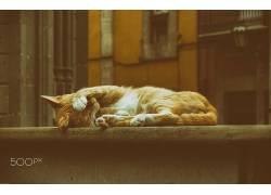 街,猫,动物,赫伯・加姆森,500px的538948