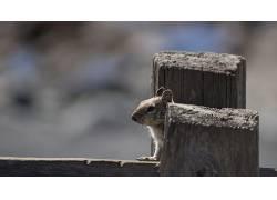 松鼠,动物542571