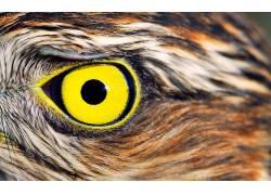 猫头鹰,眼睛,黄眼睛,鸟类,特写,动物476007