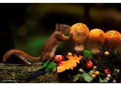 松鼠,哺乳动物,动物,蘑菇585034