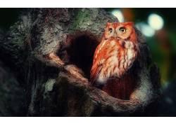 猫头鹰,鸟类,动物,树木387700
