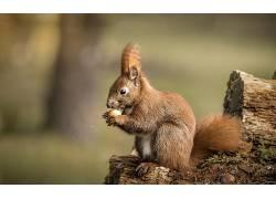 松鼠,哺乳动物,动物583504