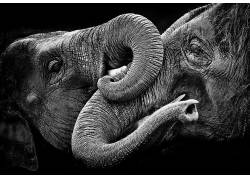 象,动物,单色529612