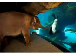 性质,动物,密封件,象,水,水下,小动物,水族馆672930