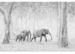 象,动物,性质573256
