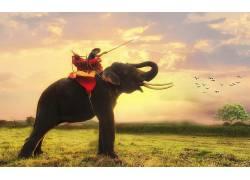 象,动物,泰国410368