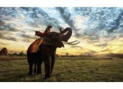 象,动物,泰国410370