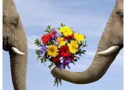 象,动物,花卉383925