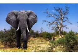 象,动物,野生动物621310