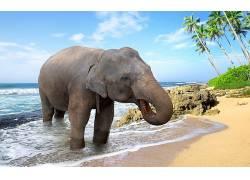 象,动物421479