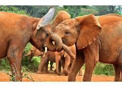 象,动物465539