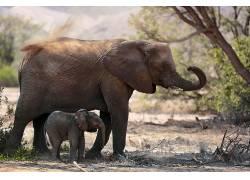 象,小动物,动物381015