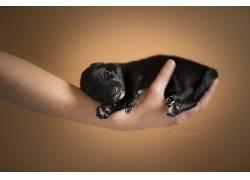 狗,小狗,睡眠,小动物,动物627050