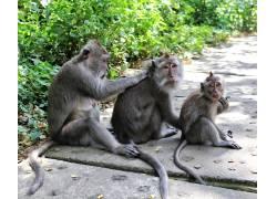 猴,动物,家庭,毛皮559303