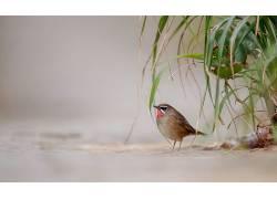 动物,鸟类,植物376816