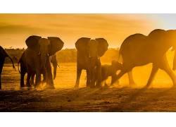 性质,动物,景深,象,托马? Hulík,非洲,小动物,阳光,野生动物,灰