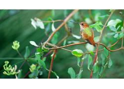 动物,鸟类,植物441820