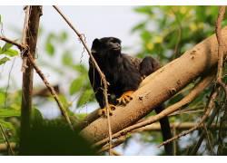 猴,动物园,动物479573