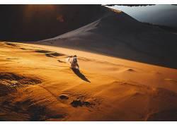 狗,性质,动物,沙漠,砂550482