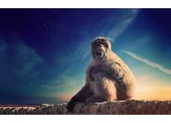猴,天空,动物421476