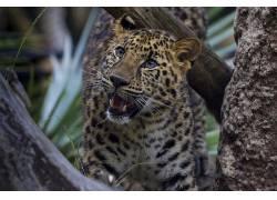 豹,大猫,动物571140