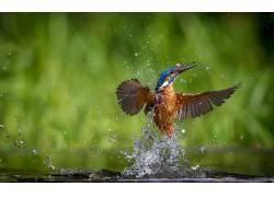 动物,鸟类,水450421