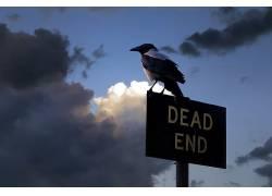 标志,动物,天空,鸟类431498