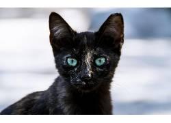 AK摄影,500px的,猫,动物,眼睛582842