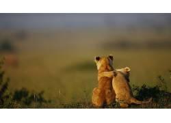动物,小动物,狮子,性质,拥抱373847