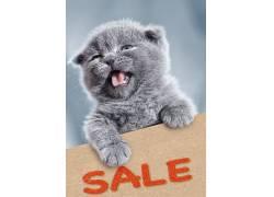 Dmytro Tolokonov,幽默,猫,动物,500px的530996