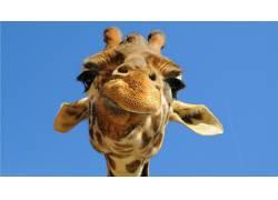 动物,幽默447056