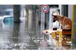 动物,德国牧羊犬,狗,水,街,洪水,路标,反射,悲,Christian Hartman