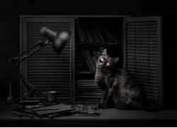 Sanket Khuntale,黑暗,灯,猫,动物,500px的530329