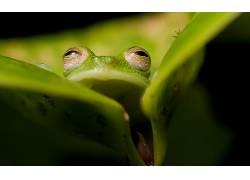 两栖动物,青蛙,动物496622