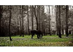 乌拉圭,马,动物425112