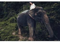 伊万Chinilov,象,动物,妇女,模型560782