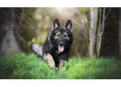 动物,性质,狗554872