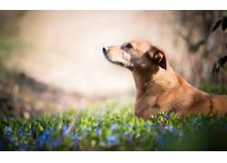 动物,性质,花卉,植物,狗500405