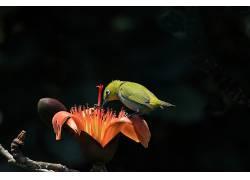 动物,性质,鸟类,植物,花卉580382