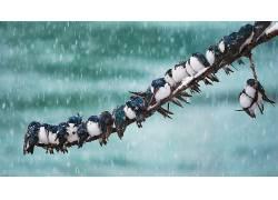 兵,2017(年),动物,鸟类,雪496973