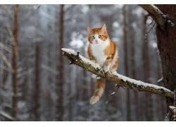 冬季,雪,动物,猫,科597309