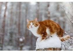冬季,雪,动物,猫597311