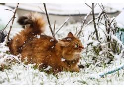 冬季,雪,性质,猫,动物625985