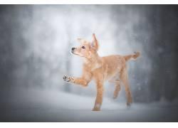 冬季,雪,狗,动物608493
